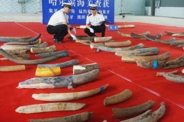 Se cree que el valor del comercio ilegal de los restos animales puede llegar a los US$43 millones al año