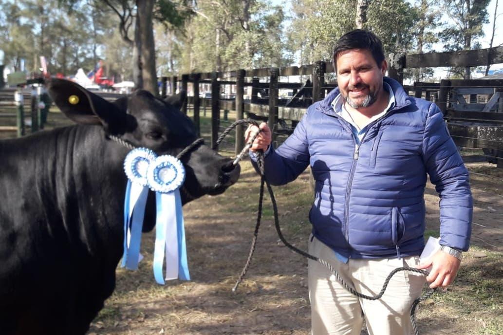 Chaco: delincuentes le carnearon una vaca campeona valuada en $500.000