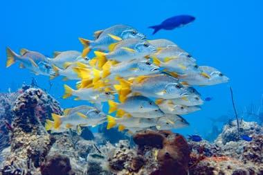 El fondo del mar del archipiélago Turks y Caicos, transparente, ideal para actividades náuticas