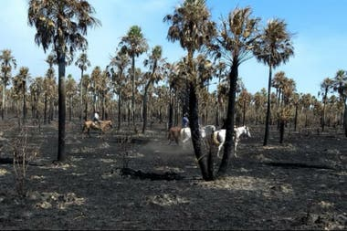 Los incendios han afectado buena parte de la provincia de Formosa