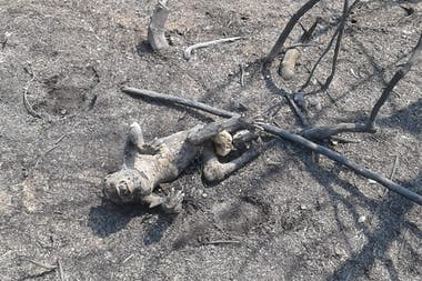 Un mono carayá se quemó vivo en el Parque Provincial San Cayetano, Corrientes
