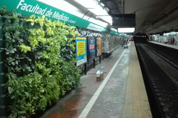 El muro verde que puso Arredo en Facultad de Medicina