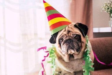 En lugar de celebrar la edad cronológica, una medida mucho más precisa de envejecimiento es observar los niveles de metilación en el ADN de un perro