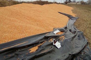 Plásticos tajeados y granos derramados, la escena que los productores temen encontrar