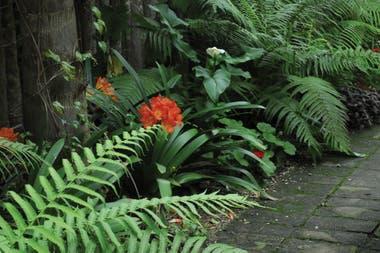 9 plantas con flores que crecen a la sombra la nacion for Plantas decorativas resistentes